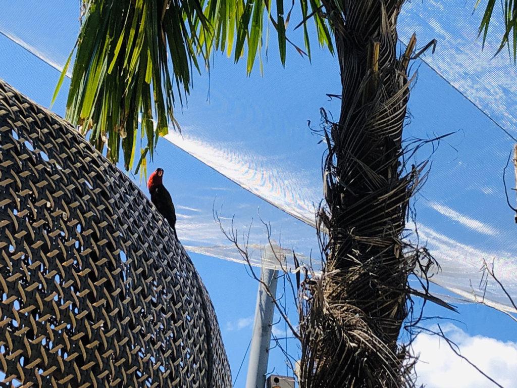 CebuOceanPark-セブ島水族館-セブオーシャンパーク26