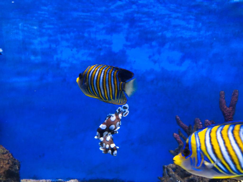 CebuOceanPark-セブ島水族館-セブオーシャンパーク