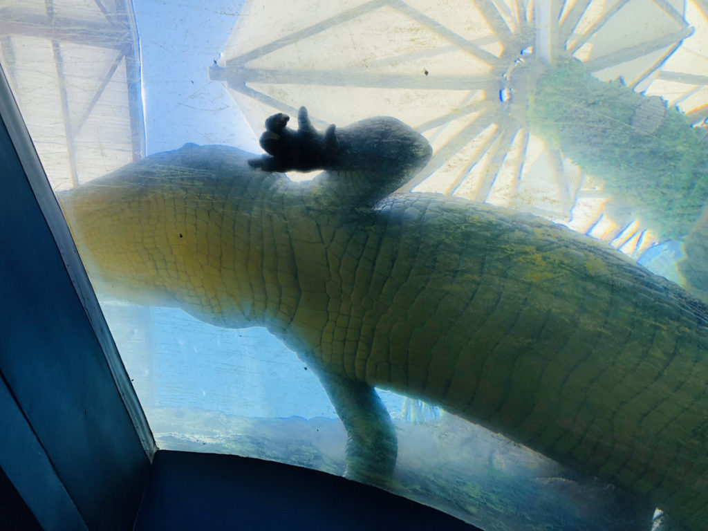 CebuOceanPark-セブ島水族館-セブオーシャンパーク13