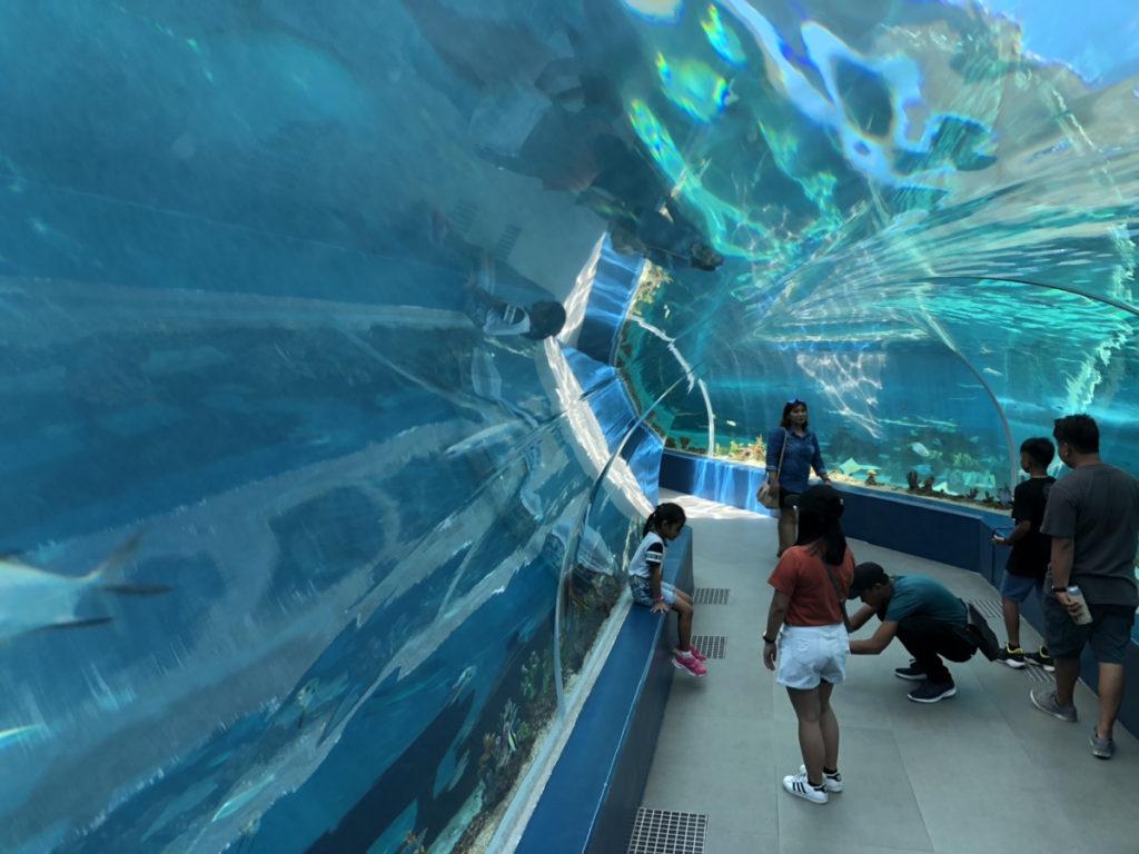 CebuOceanPark-セブ島水族館-セブオーシャンパーク14