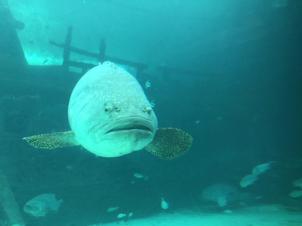 CebuOceanPark-セブ島水族館-セブオーシャンパーク7