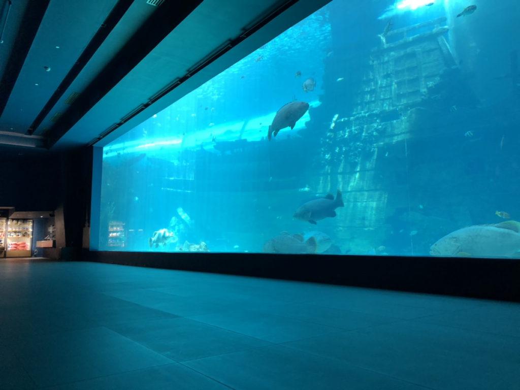 CebuOceanPark-セブ島水族館-セブオーシャンパーク8