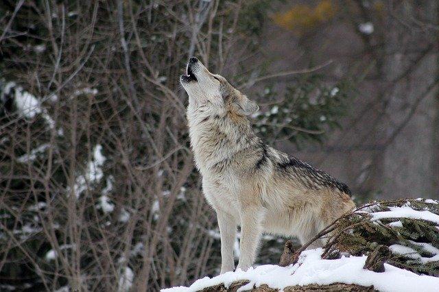 U-NEXT 狼と香辛料